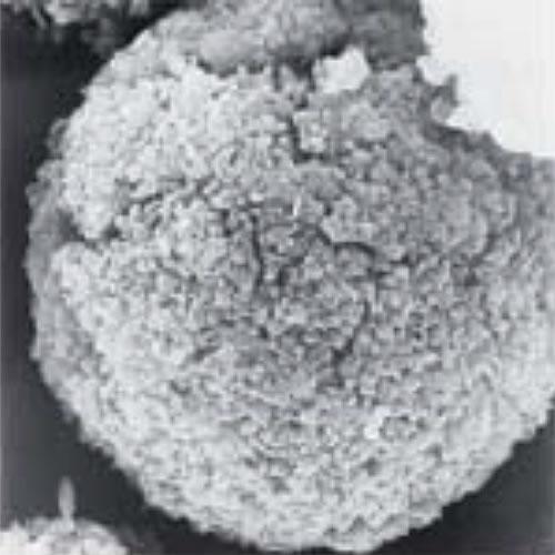 写真:人工ゼオライト粒子