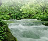 写真:水質浄化