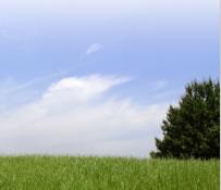 イラスト:土壌浄化・回収